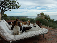 Four Freeloading Basset Hounds