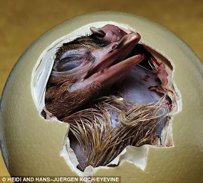 foto-menarik.blogspot.com - Foto-Foto Menakjubkan Saat Hewan Keluar dari Telurnya