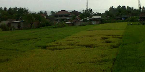 foto crop circle di bantul