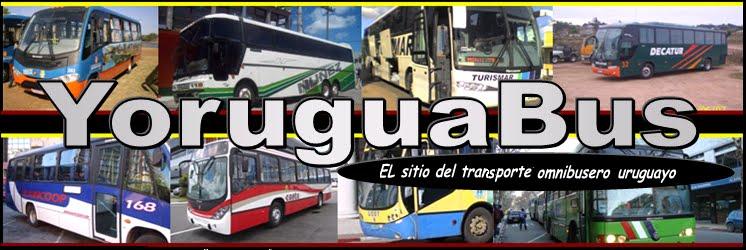 Yoruguabus
