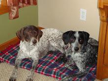 Our Precious Dogs