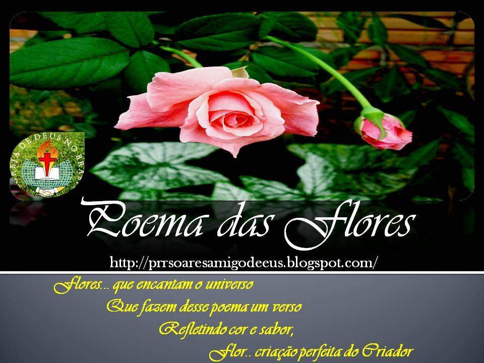 rosas no jardim de deus : rosas no jardim de deus:flores no jardim rosas tulipas jasmim