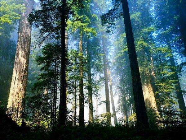 ¡El árbol no me dejaba ver el bosque!