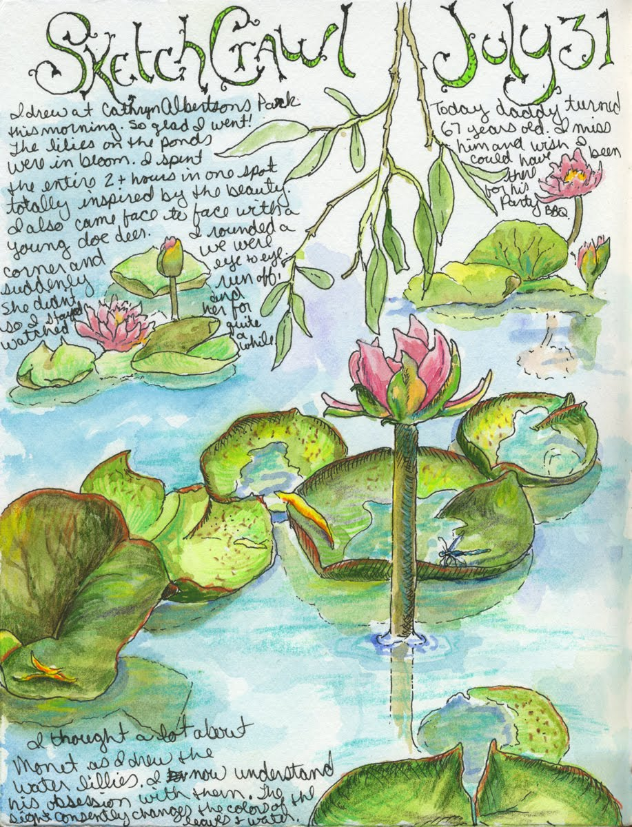water lily sketches