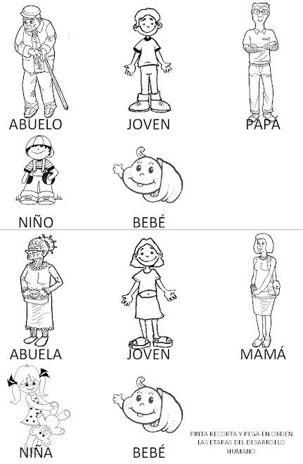 Dibujos para colorear del crecimiento humano - Imagui