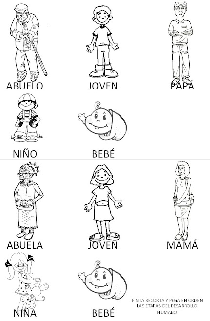 Etapas del desarrollo humano PARA COLOREAR - Imagui