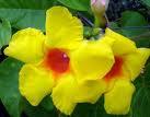 A bela flor amarela
