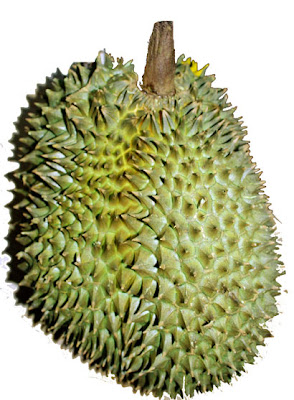 http://3.bp.blogspot.com/_a5abCT2isic/TBnlC-2QCJI/AAAAAAAACzk/hy_r_HASvXU/s1600/simpson_leaf_lettuce_lg.jpg