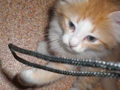Dat touwtje zie ik overal en altijd!