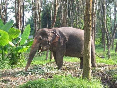 Таиланд. Краби. Слоны