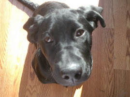 Last but not least, our black lab, Shooter!