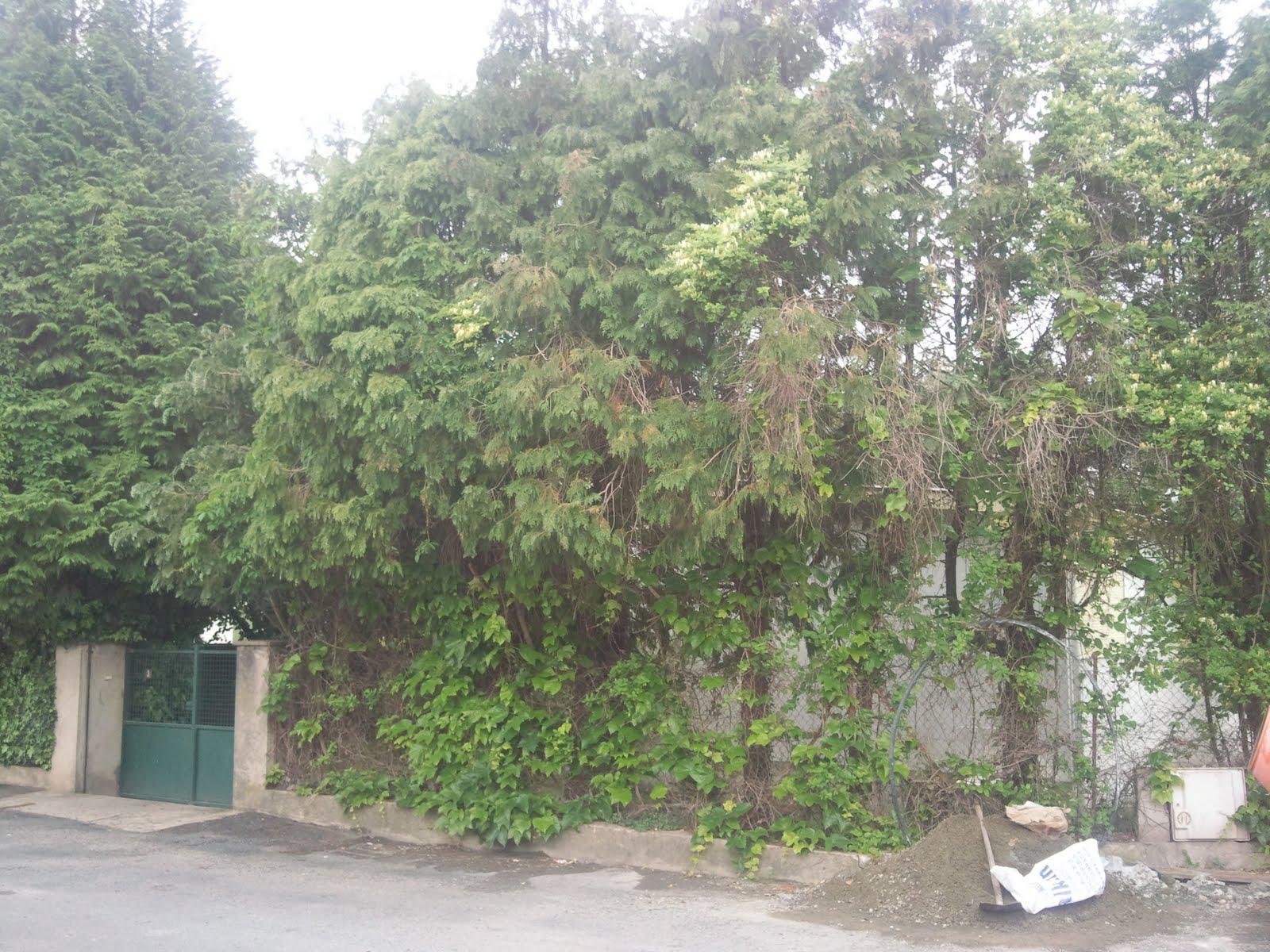 Parcs et jardins de nicolas visitez mes avant apres for Entretien jardin urrugne