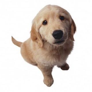 Gifs animados de perros