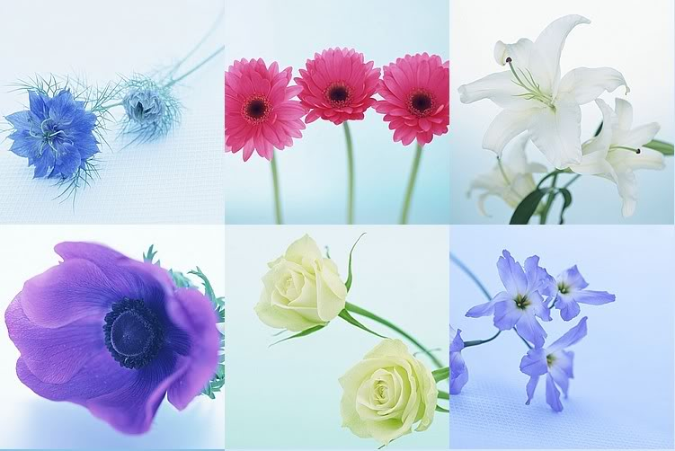 wallpapers flower. Flowers Wallpaper Desktop.