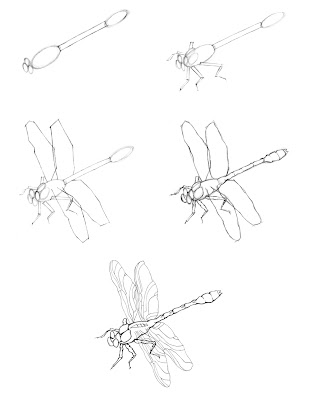 Dragonfly Drawing Images. Reference Picture: Dragonfly