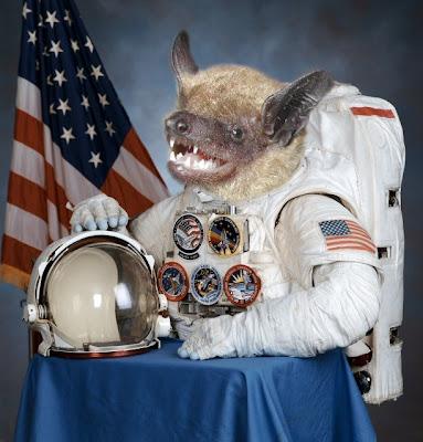 spacebat_astronaut.jpg
