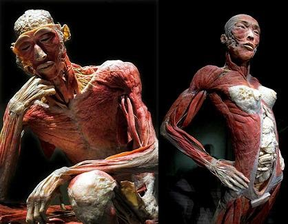 Anatomia para estudiantes: Nemotecnias