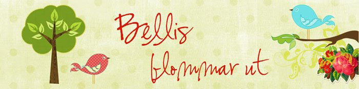 Bellis blommar ut