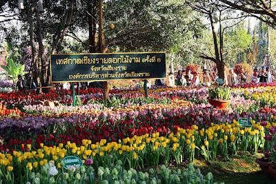 chiangrai flower festival