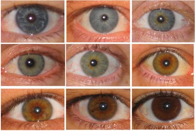 Brown Eye Color Chart
