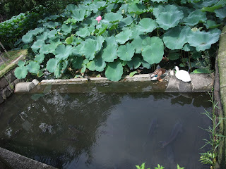 Lo del fondo es un estanque, aunque no lo parezca