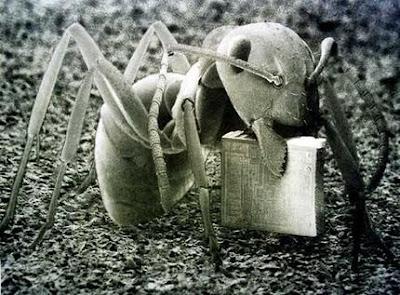Hormiga con microchip