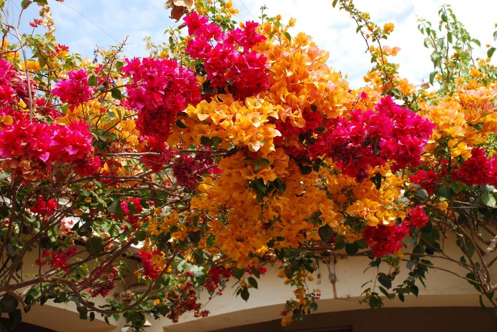 aguaray - ofm: Primavera en Aguaray