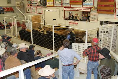 Cattle Auctions on Idaho Farm Bureau   News  March 2010