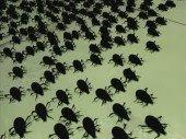 Chakra Bugs