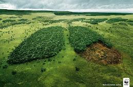 Los pulmones de la Tierra