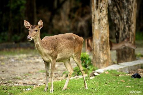Salah satu cara melindungi flora dan fauna langka:melindungi tempat ...