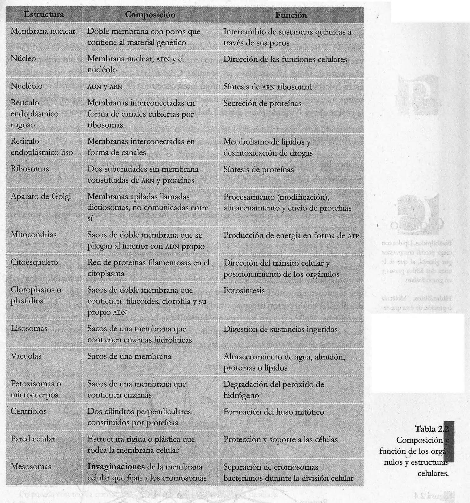 Evolución y Biomas - Monografias.com - Tesis, Documentos