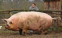 El cerdo