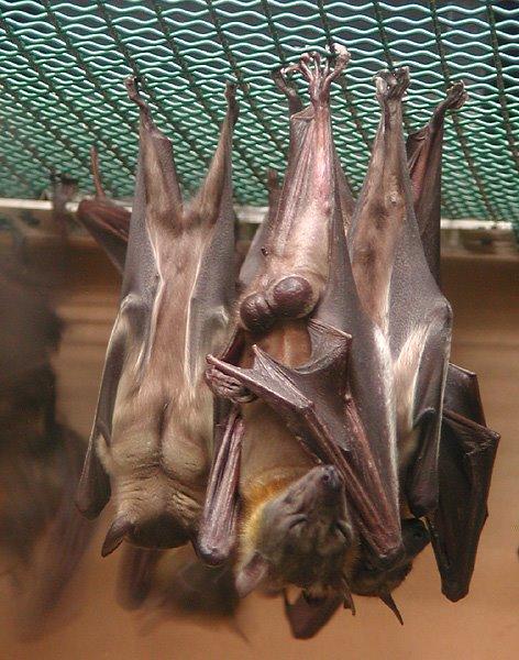 [Bats_sleeping.jpg]