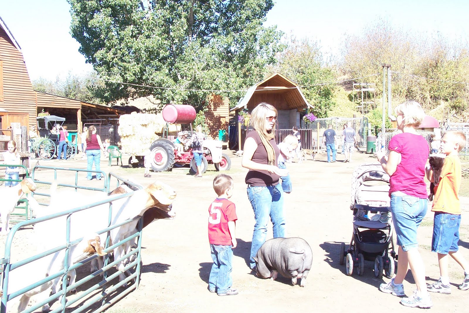Carver's Cove Petting Farm