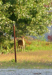Deer in the Flats of Cleveland