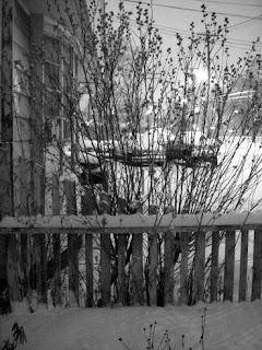 Barren Bushes in Snow