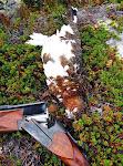Jakt Finnmark VIDEO