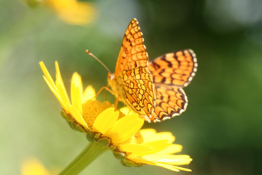 Respeito Flor-silvestre_borboleta