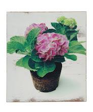 My Veg Gardening Blog