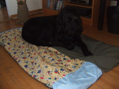 Homemade dog bed in real life for Homemade beds for dogs