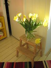 Herlige tulipaner