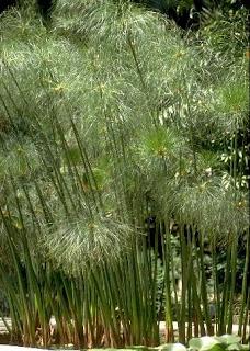 ������ �������� ������� ����� �������� papyrus4.jpg