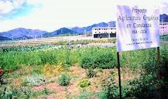 Proyecto  Agro Orgánico