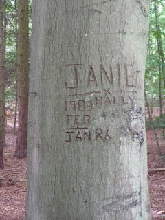 A tree-trunk with carved graffiti