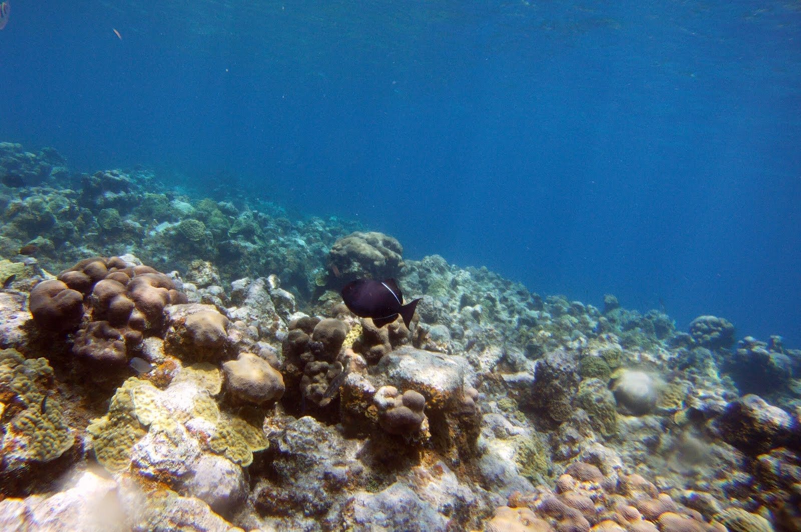 Underwater Ocean Rocks Underwater at eden s rock Underwater Ocean Rocks