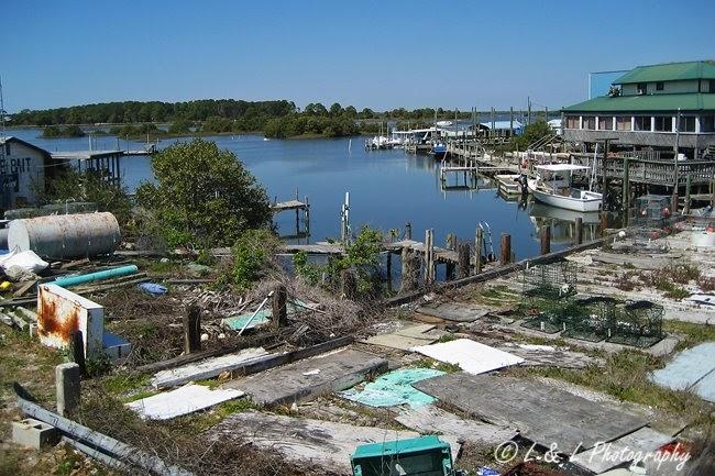 Cedar key florida photos fish camp for Cedar key fl fishing