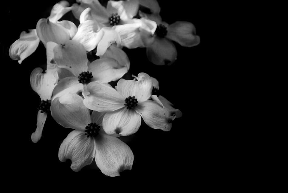 Black And White Pictures Of Flowers. lack and white flowers. lack