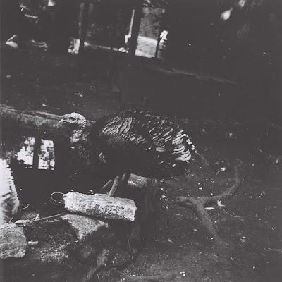 a turkey in bandung zoo with lubitel 166 u and fuji neopan across 160