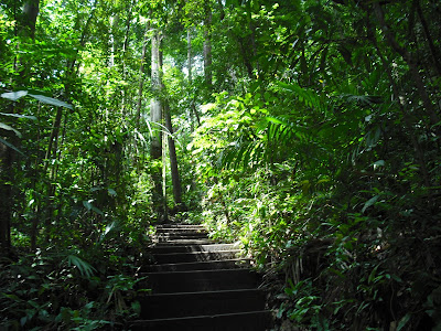 The-Bukit-Timah-Nature-Reserve-Singapore-relaxation-meditation-holiday